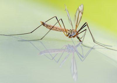 mosquito-1754359_1920